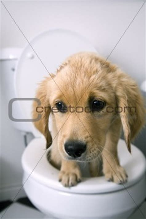 Watery Bloody Stool In Dogs by Types Of Diarrhea In Dogs Pictures To Pin On