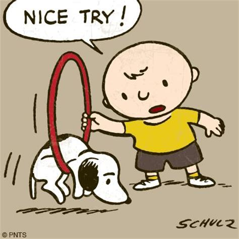 Good Try Meme - happy hump day snoopy pinterest