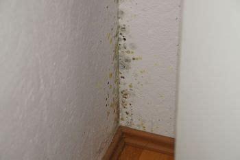 schimmel in der wohnung erkennen entstehung entfernen und sanierung schimmel in der
