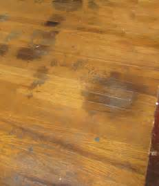 Hardwood Floor Stain Removal Hardwood Floor Pet Stains Solution Addicted To Rehabs