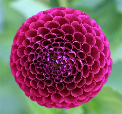 Natural Pattern Flower | nature patterns a gallery on flickr