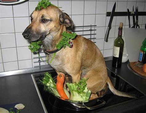 Dog Cooking Meme - 개고기 합법화해야 하는가 디베이팅데이