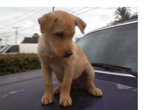 imagenes animales carroñeros tiesto 193 lbum de fotos de cynthia perros com