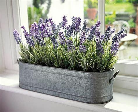 badezimmer deko lavendel sch 246 ne zimmerpflanzen erf 252 llen die rolle dekoration