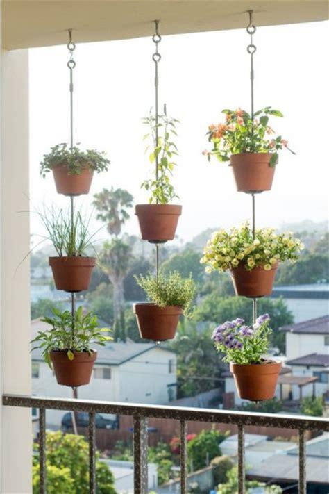 Tanaman Gantung tanaman bunga gantung related keywords tanaman bunga gantung keywords keywordsking