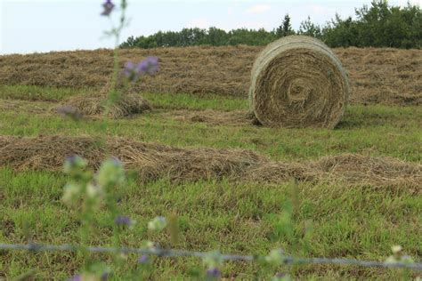 cut hay bale farm lines harvest free stock photo