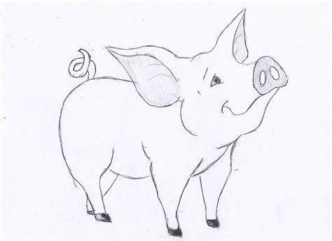 how to sketch how to draw a pig hqdraw