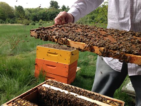 backyard apiary backyard beekeeping photo gallery mainetoday