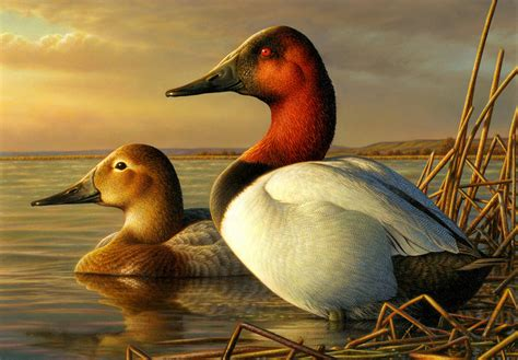 17 best images about painting ducks on pinterest old federal duck sts for 2014 15 season on sale central