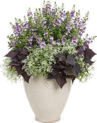 Hiasan Ruangan jenis jenis bunga untuk hiasan dalam ruangan dan taman rumah