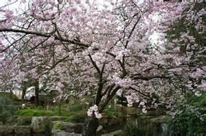 jardin japonais 224 nantes
