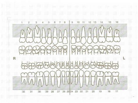 dental chart pin tooth chart on