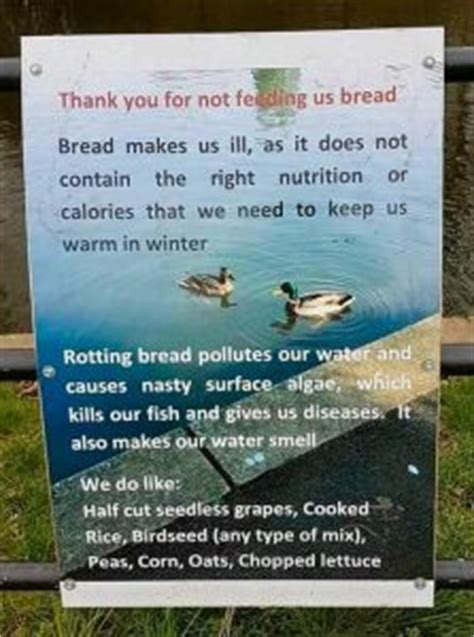 thank you for not feeding the ducks. – ssci environmental
