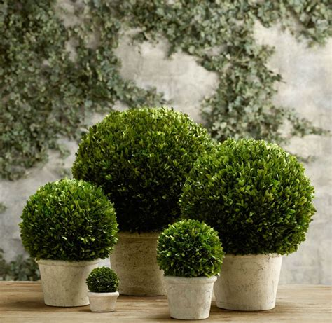 topiary style a dash of manicured charm
