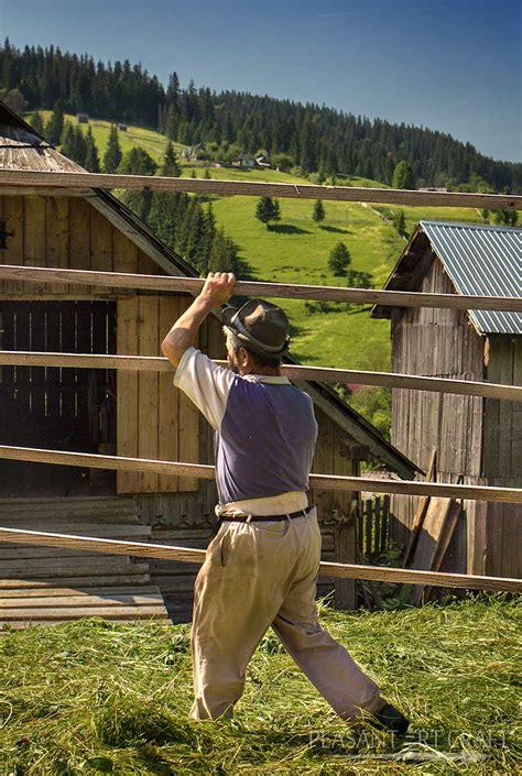 hay making  romania crafting haystacks mowing scything