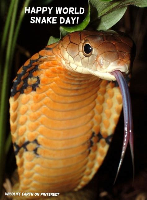 Snake Day world snake day 16th july 2015 types facts images about