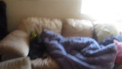 couch potato funny couch potato dog funny animal videos funny pet videos