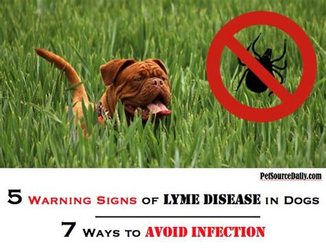 signs of lyme disease in dogs 17 best ideas about tick bite on tick treatment tick removal