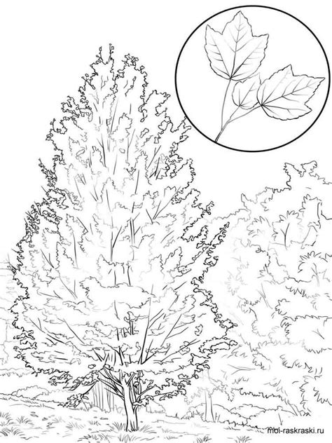coloring page maple tree maple tree coloring pages for kids free printable maple