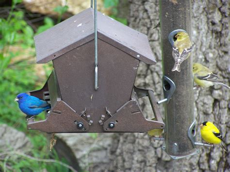 Bird Feeder Location Gallery Locations State Parks