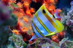 colorful saltwater fish pin by vickie schumaker thomason on fish of all colors and