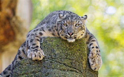 reset nvram snow leopard snow leopard wallpaper 1920x1200 47076 wallpaperup