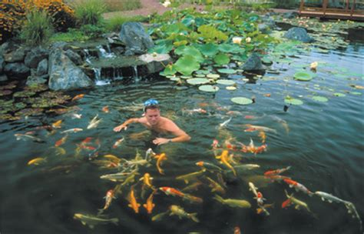 backyard (fish) pond builders/contractors/company
