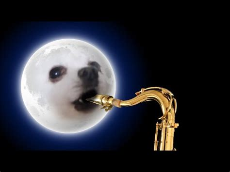 rk puppies gabe the bork remixes gallery your meme