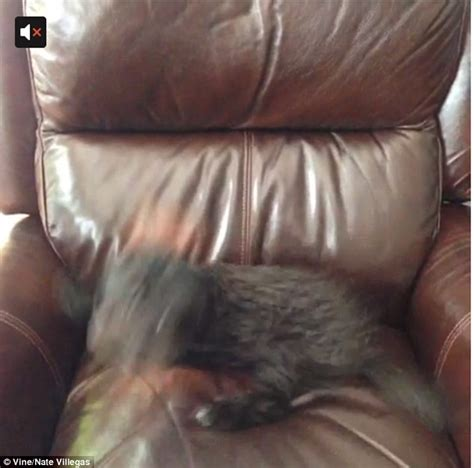 stop dog jumping on couch my dog is overprotective of the house stop dog jumping on
