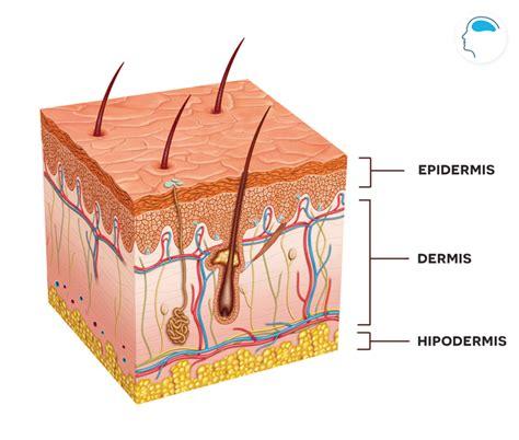co receptivo de la piel nuestra piel se comunica con nosotros descodificaci 243 n