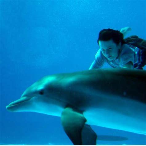 imagenes reales de winter el delfin hab 237 a una vez winter el delf 237 n diario animales