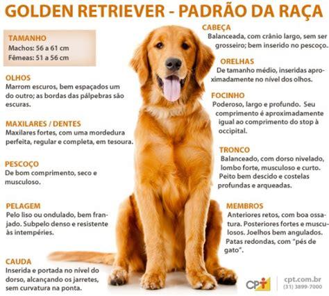golden retriever caracteristicas curso como montar um canil ra 231 a golden retriever ra 231 a golden e padrinhos