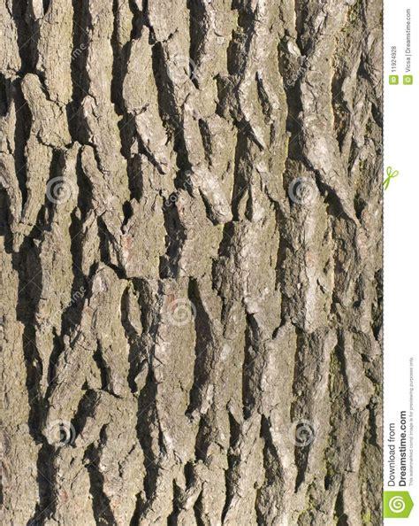 tree bark texture royalty free stock photos image 11924928