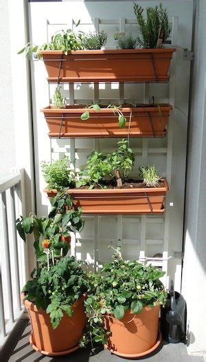 What are the plants good for a balcony garden in South