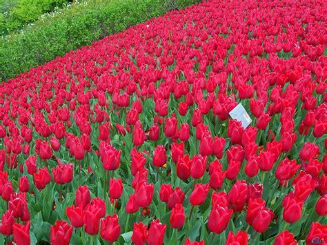 Flowers Garden Flower Garden Wallpaper Http Refreshrose