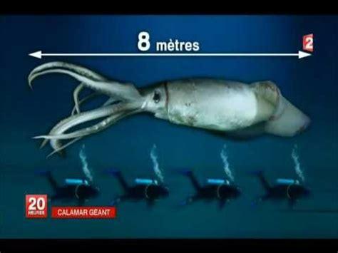 calamar géant youtube