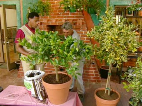plants at home growing citrus trees diy