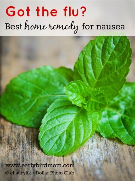 7 Home Remedies For Nausea by 1000 Ideas About Stomach Flu Remedies On