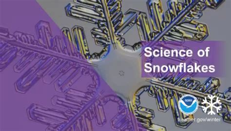 more insights about the science of snowflakes : the