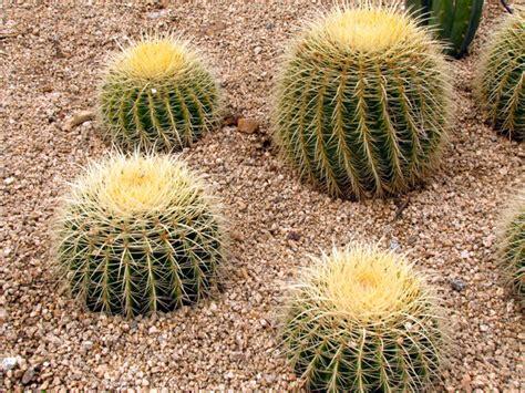Tv In Kitchen Cabinet by Golden Barrel Cactus Landscape