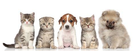 kittens puppies puppies kittens care winnetka il winnetka animal hospital