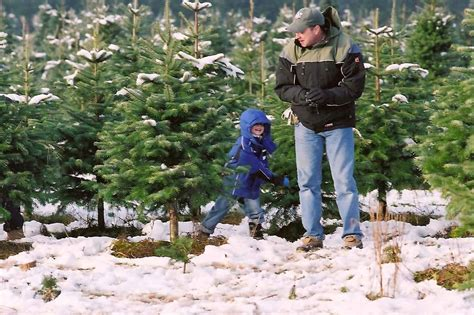 xmas tree farm carnation handy guide to u cut tree farms in the valley savor snoqualmie valley