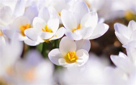 imagenes flores blancas banco de imagenes y fotos gratis imagenes de amor flores