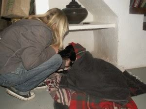 spaying a recovery how is recovery after spaying a