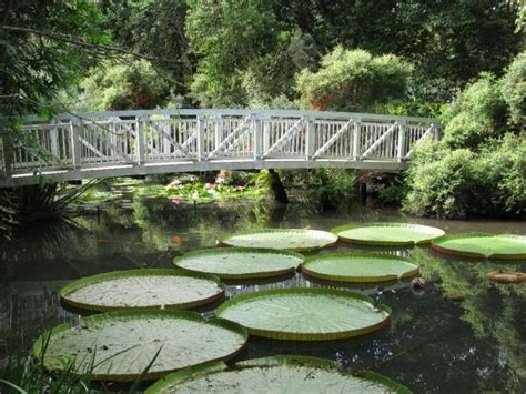 17 Best Images About Gardens Beautiful Gardens All Gainesville Botanical Gardens