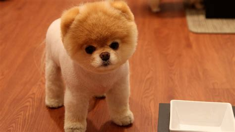 cute dog wallpapers for android desktop wallpaper box cute puppy android wallpapers for free