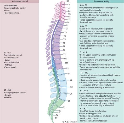 spinal cord injury diagram spinal cord injury spinal cord and cords on