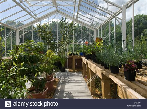 greenhouse benches uk greenhouse benches uk pot plants on timber benches in a
