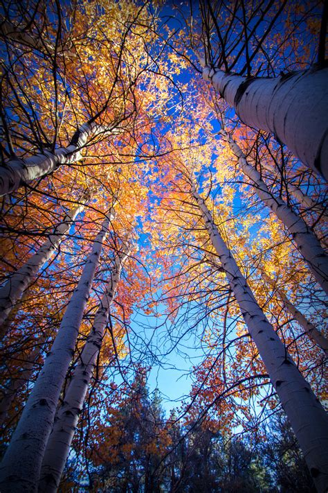 in color reno northern nevada color by sellsworth on deviantart