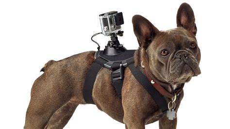 Gopro Fetch Harness gopro s 60 harness turns dogs into filmmakers abc news